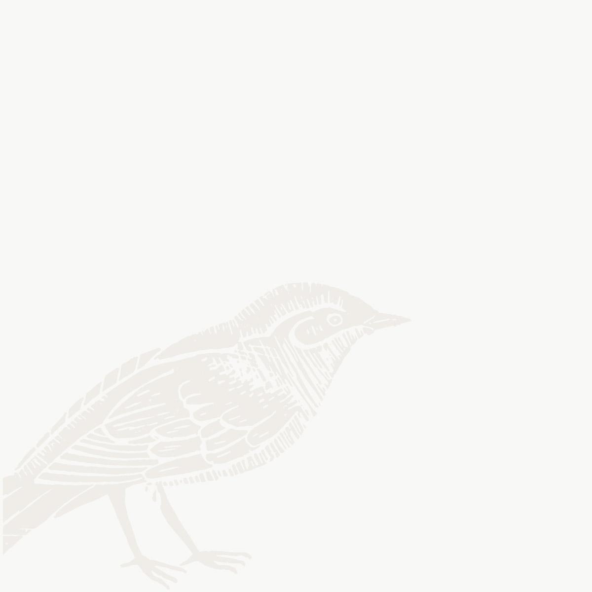 Grafica uccello